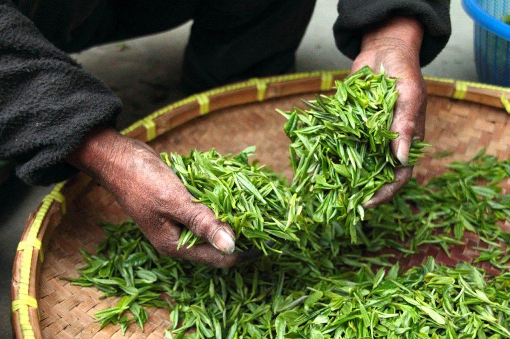 Groene theebladeren