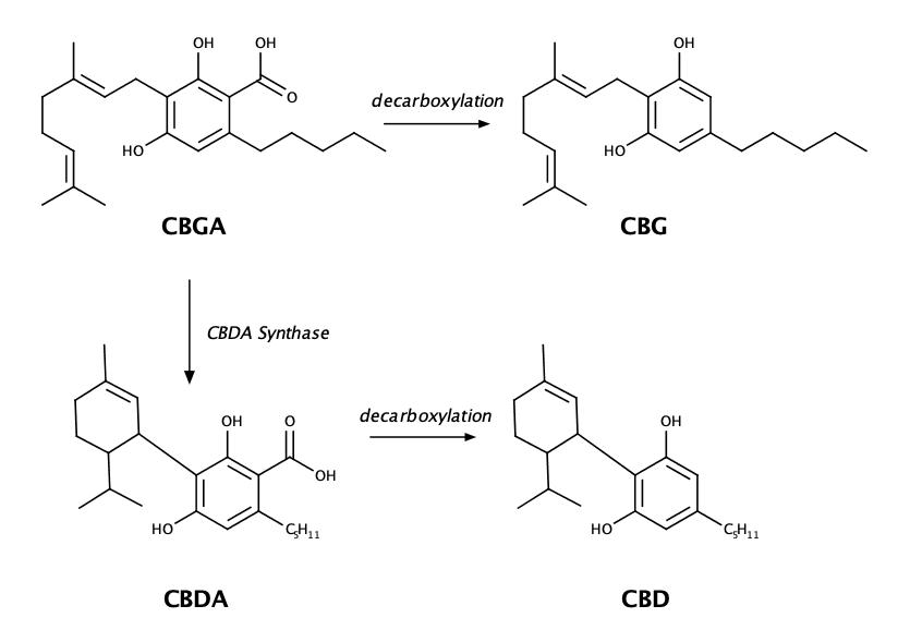Chemische samenstelling van CBG